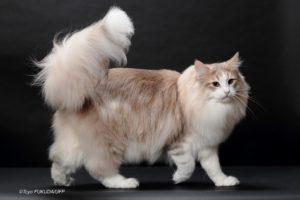 キャッテリーの猫たち(男の子)ヴァレンティノ
