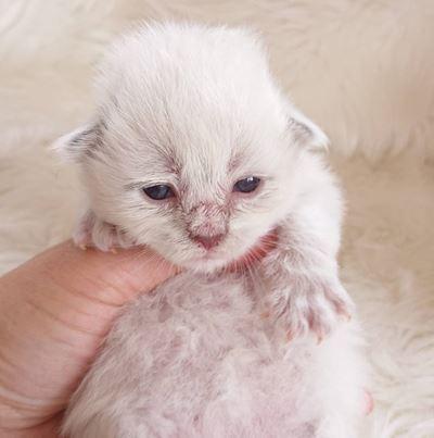 やんちゃんの子猫たち②目が開いてきました